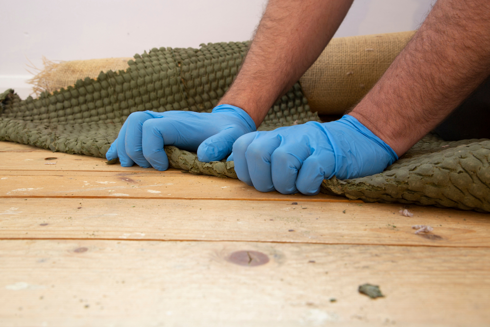 How Much Bacteria Is Probably In Your Carpets