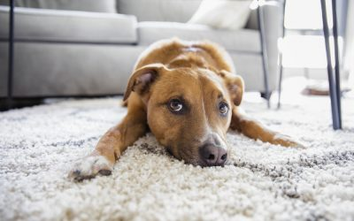 Keep Your Carpet Clean, Even If You Have A Furry Friend